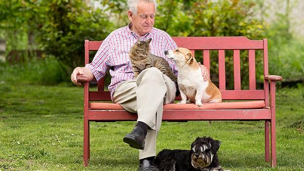 Amici a quattro zampe: un vero toccasana per la salute fisica e mentale degli anziani